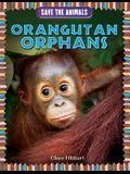 Orangutan Orphans