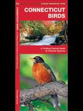 Connecticut Birds: A Folding Pocket Guide to Familiar Species