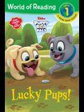 Puppy Dog Pals: Lucky Pups