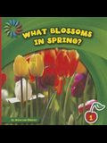 What Blossoms in Spring?