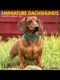 Just Miniature Dachshunds 2022 Wall Calendar (Dog Breed)