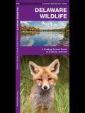 Delaware Wildlife: A Folding Pocket Guide to Familiar Species