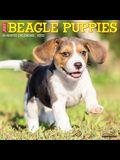 Just Beagle Puppies 2022 Wall Calendar (Dog Breed)