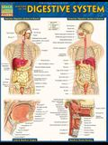 Anatomy of the Digestive System: Quickstudy Laminated Reference Guide