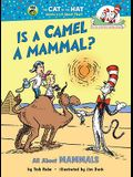Is a Camel a Mammal?: All about Mammals