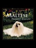 The Maltese: Diminutive Aristocrat