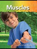 Muscles (the Human Body)