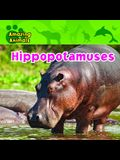 Hippopotamuses (Amazing Animals (Gareth Stevens Paperback))