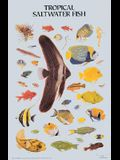 Tropical Saltwater Fish Poster