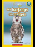 National Geographic Kids: Les Harfangs Des Neiges (Niveau 1)