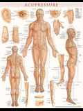 Acupressure Poster (22 X 28 Inches) - Laminated: Anatomy of Points for Acupressure & Acupunture