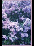 Your Mini Notebook! Vol. 56: The Lovely Glow of Lilacs in Bloom
