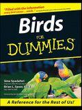 Birds for Dummies