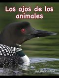 Los Ojos de Los Animales (Animal Eyes)