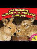 Los Gazapos Crecen y Se Vuelven Conejos