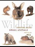 Wildlife Painting Basics: Small Animals