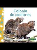 Colonia de Castores (Beaver Colony)