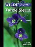 Wildflowers of the Tahoe Sierra