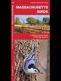 Massachusetts Birds: A Folding Pocket Guide to Familiar Species
