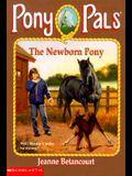 The Newborn Pony (Pony Pals #28)