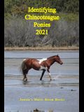 Identifying Chincoteague Ponies 2021