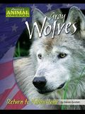 Gray Wolves: Return to Yellowstone
