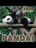 Pandas 2020 Mini Wall Calendar