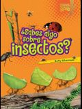 ¿sabes Algo Sobre Insectos? (Do You Know about Insects?)