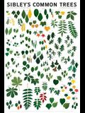 Sibley's Common Trees of Eastern North America Wall Poster
