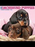 Just Dachshund Puppies 2022 Wall Calendar (Dog Breed)