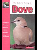 The Guide to Owning a Dove