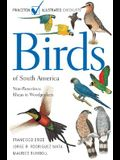Birds of South America: Non-Passerines: Rheas to Woodpeckers