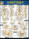 Anatomy - Reference Guide (8.5 X 11): A Quickstudy Reference Tool