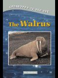Creatures of the Sea: Walruses