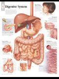 Digestive System Chart: Laminated Wall Chart