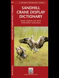 Sandhill Crane Display Dictionary: What Cranes Say with Their Body Language