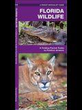 Florida Wildlife: An Introduction to Familiar Species