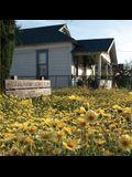 Fritz Haeg: Wildflowering L.A.