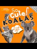 So Cute!: Koalas
