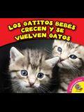 Los Gatitos Bebes Crecen y Se Vuelven Gatos