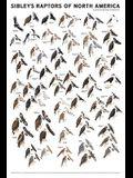 Sibley's Raptors of North America
