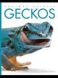 Amazing Animals: Geckos