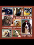 A Dog's Life: A Collection of Humorous Tributes Celebrating Man's Best Friend
