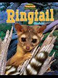 Ringtail: Miner's Cat
