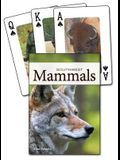 Mammals of the Southwest