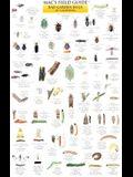 California Garden Bugs