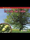 La Vida del Roble = The Life of an Oak Tree