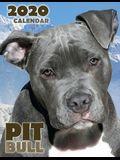 Pit Bull 2020 Calendar