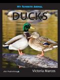 My Favorite Animal: Ducks