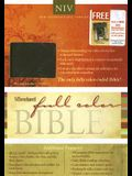 Standard Full Color Bible-NIV